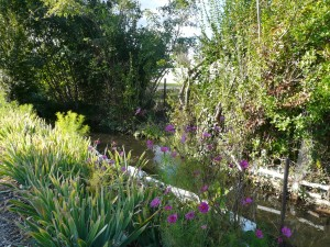 La Rize le long des jardins ouvriers de la Ville de Villeurbanne (ph. D. Grard)