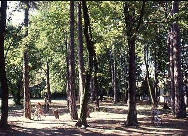 Parc de la commune
