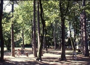 Les grands arbres du parc de la Commune de Paris en août 1989 (ph. Schuller-AMV)