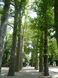 L'allée de platanes du parc de la Commune de Paris en été 2016 (ph. S. Majdar)