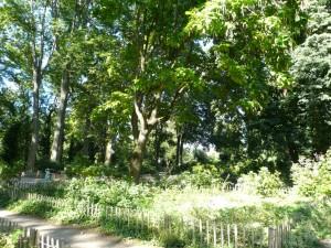 La partie sud du parc de la Commune-de-Paris en été 2016 (ph. S. Majdar)