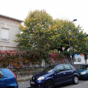 Chirat rue 36_Ensemble Arbres Est_20161030